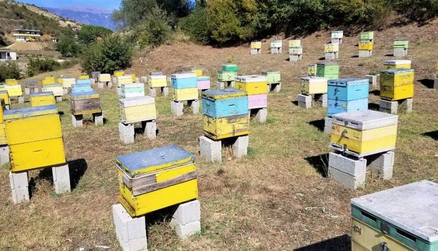 Albania honey
