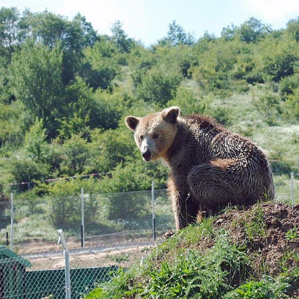 Bear_sanctuary_Prishtina_
