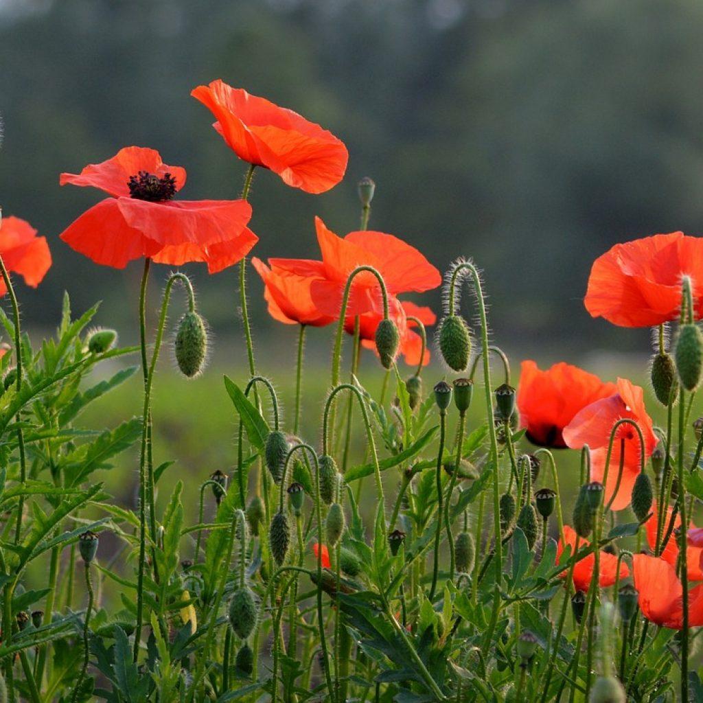 flower 1449981 1920