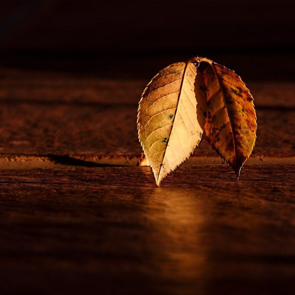 leaf 409258 1280